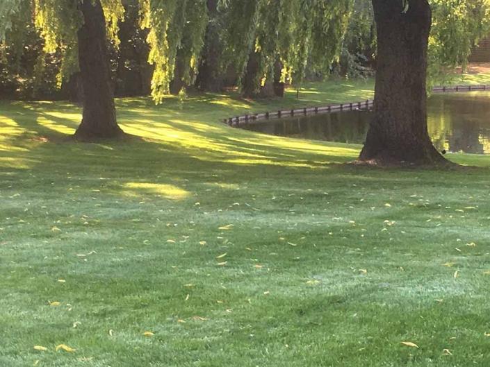 Feys-Schouppe tuinaanneming tuinonderhoud