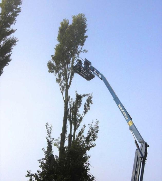 Feys-Schouppe snoeiwerken bomen